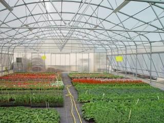 Serre tunnel Pretamo pour production florale en faveur des pépinières Espaces Verts de la ville d'Issoudun